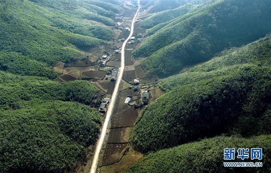 陕西镇巴:木竹林海