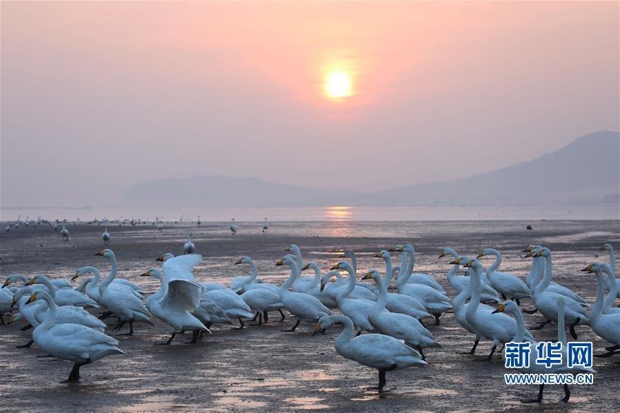天鹅湖晨曲