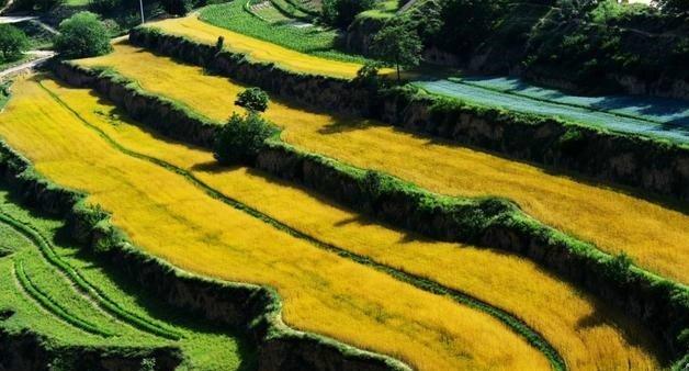 走进如画的黄土高原,就不想再去江南了!