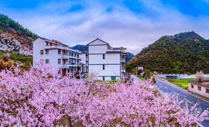 浙江农村秘藏两处樱花,风景比日本好,还不要门票