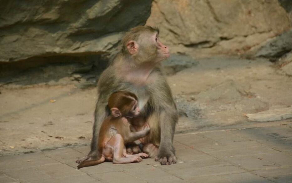 """北京动物园游客""""挂面喂猴""""成灾现象已有两年"""