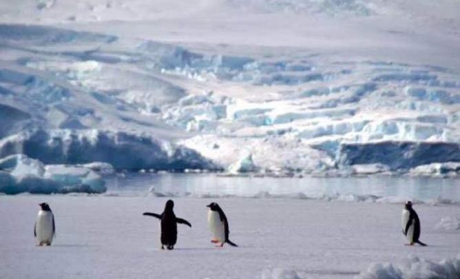 企鹅、海豹、鲸鱼让南极之恋更加浪漫