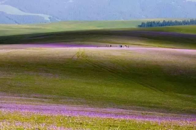 喀拉峻草原,悬浮在空中的鲜花草原,天堂也不过如此!