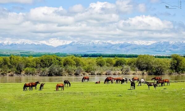 中国最后一个天马故乡,靠养马脱贫致富,发展马文化旅游年入4亿