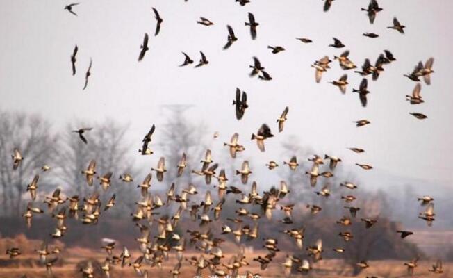 这种自然奇观我已等了7年,还是没能等到,几百万只鸟都飞哪啦?