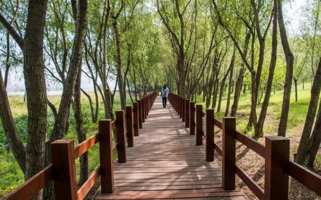 河南三门峡有个不收门票的天鹅湖,被列为5星摄影基地