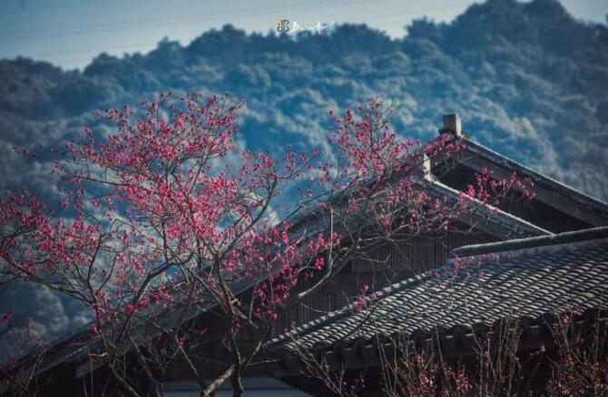 江苏这座江南味的小城,居然藏了这样一个世界级赏樱地!