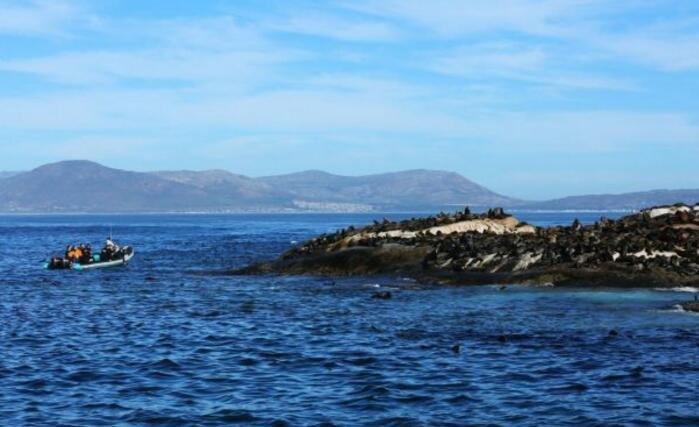 这群海豹,有整个国家做靠山,每天在岛上消遣无惧游客