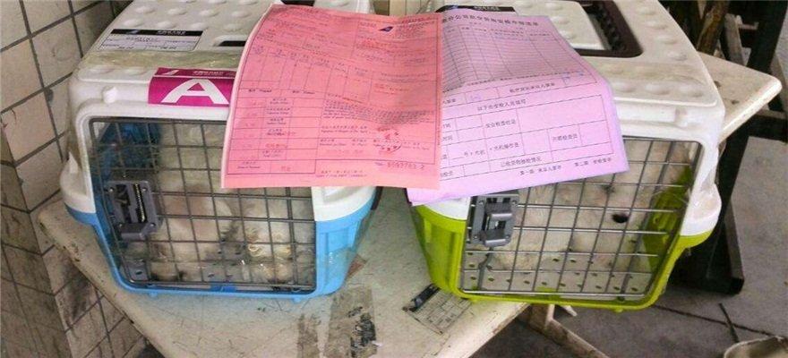托运宠物犬被打成重伤 机场:曾启动应急围捕