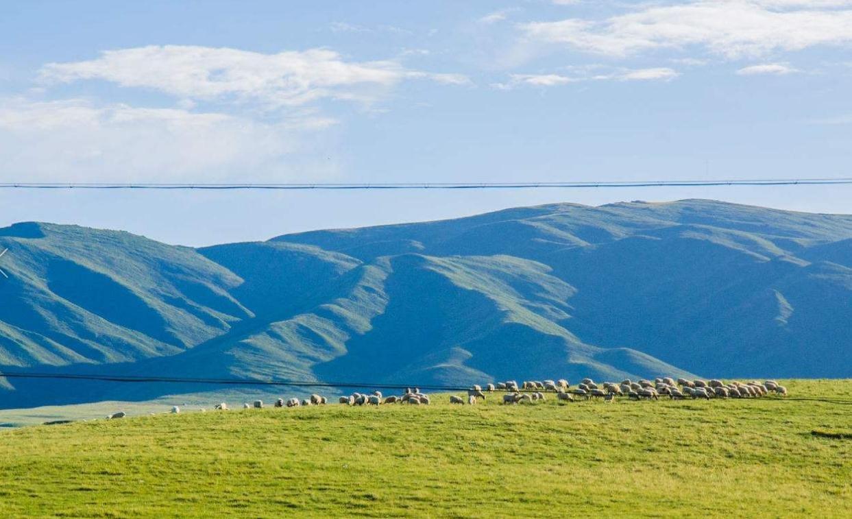 青海确定今年旅游发展目标:实现旅游收入460亿