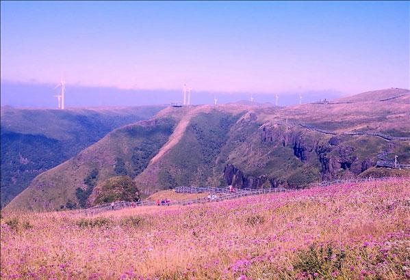 高山之巅 看野生韭菜花形成的云上花海