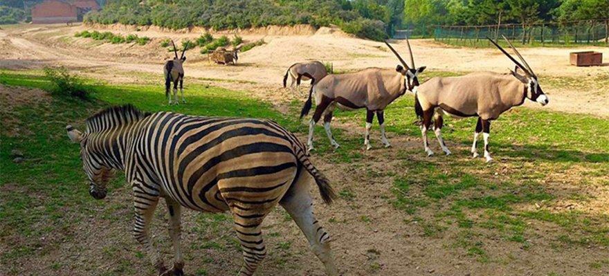 八达岭野生动物园再曝两儿童猛兽区探出天窗