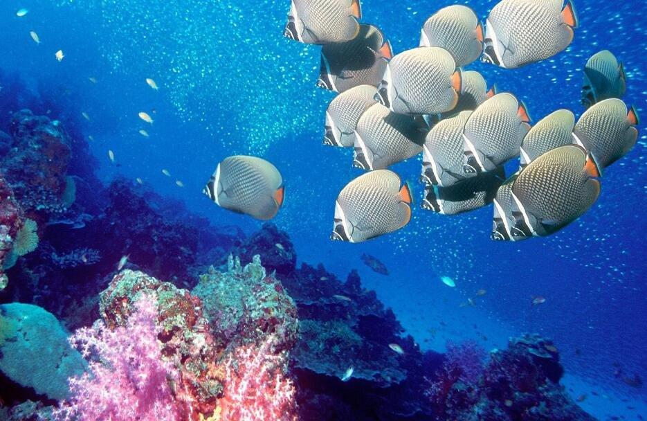 精美绝伦的4K海底世界演示片,太美了!