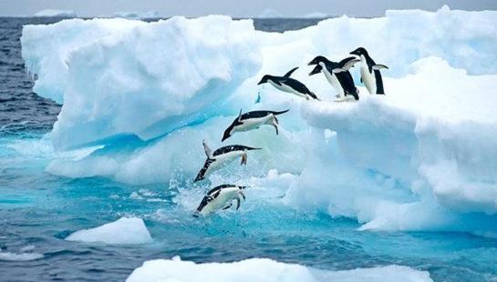 南极不难及,去南极都要准备些什么呢?