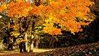 中国十大最美秋色