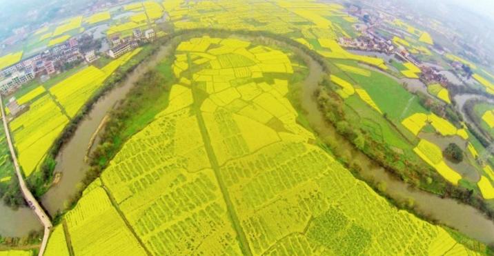湖南衡阳县76万亩油菜花开成海   这个春天说走就走