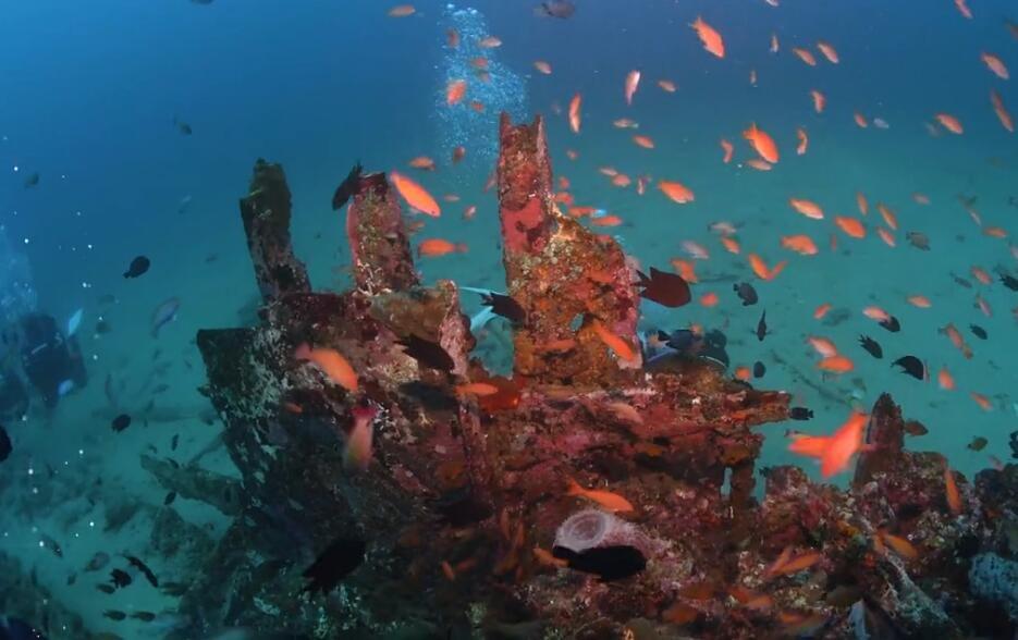 潜行家-纪实《我在海岛有个家》