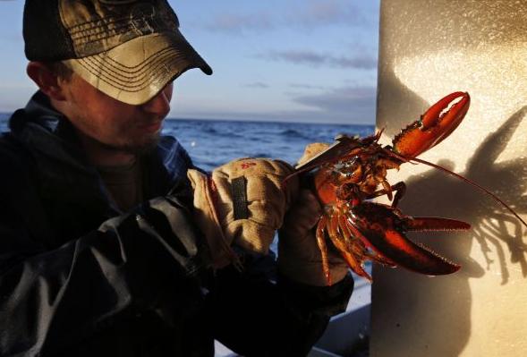 美媒称中国人一年吃掉7.5亿元美国龙虾:一种买得起的奢华