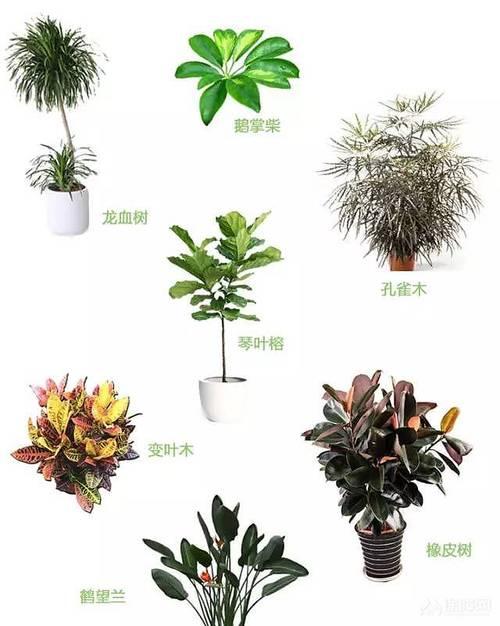 室内植物搭配指南 家装增色必备法宝!