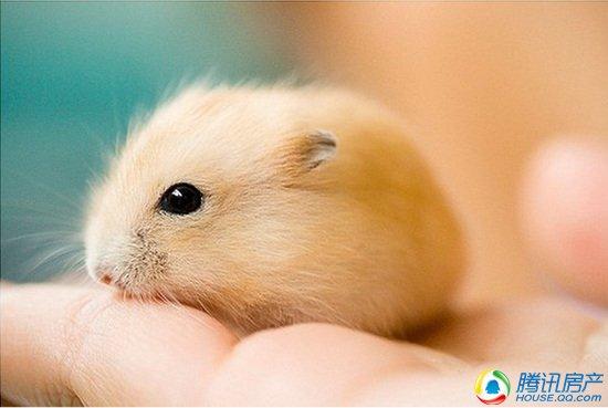仓鼠君最爱什么?瓜子花生游乐园!没错,5月1-3日,仓鼠君带着它的