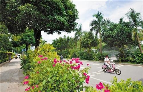 南宁推进45条道路绿化用地扬尘治理 确保治理成果