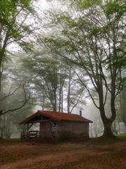 林中小屋:喧嚣外的梦幻殿堂