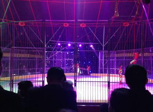 【马戏】希尔顿国际公馆皇家大马戏狂欢进行中