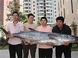 关键词盘点:大鱼