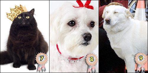 世界宠物富豪榜公布:牧羊犬身价超2亿英镑