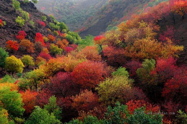 美丽的伊犁河谷