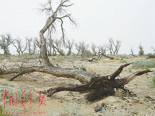 沉痛!我们应该关注的:两大沙漠夹击:民勤绿洲还能绿多久?