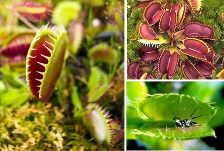 花食虫和人