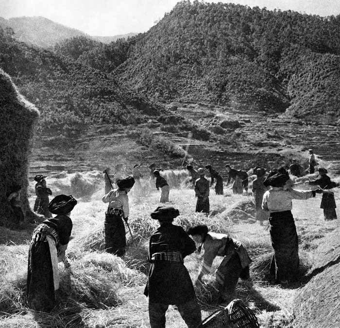 云南宁蒗的普米族社员在打场,1958年 郝纯一 摄