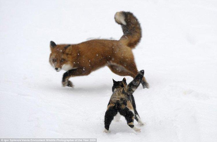 高清图:2009英国野生动物摄影奖揭晓_国际花边_新闻