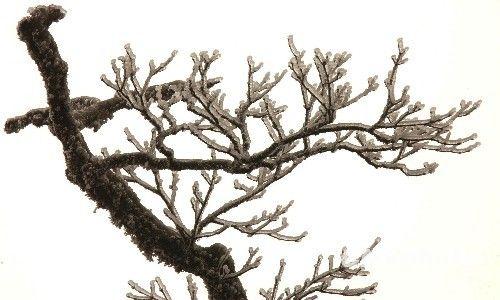 贵州雷公山国家森林公园出现美丽雾凇
