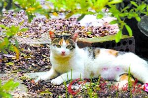 上海植物园否认杀死一只猫奖励10元(组图)