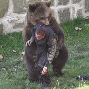 游客掉进熊窝遭攻击 警方开枪施救(组图)
