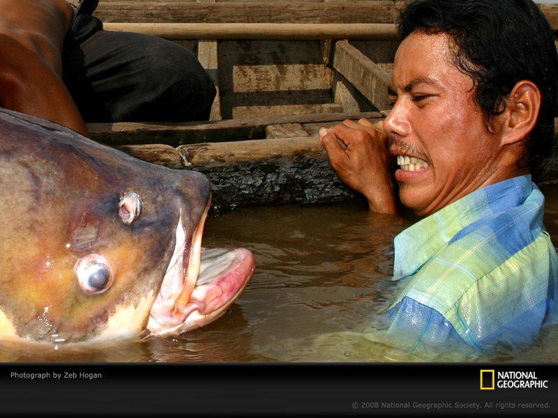高清图:盘点各地巨型淡水鱼 鲟榜上有名