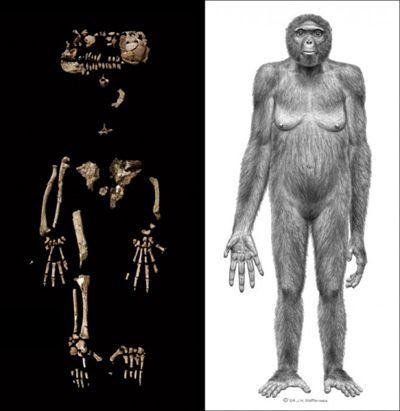 出土了许多原始女性偶像,这些偶 -   非洲女人生值器活人图,女人使
