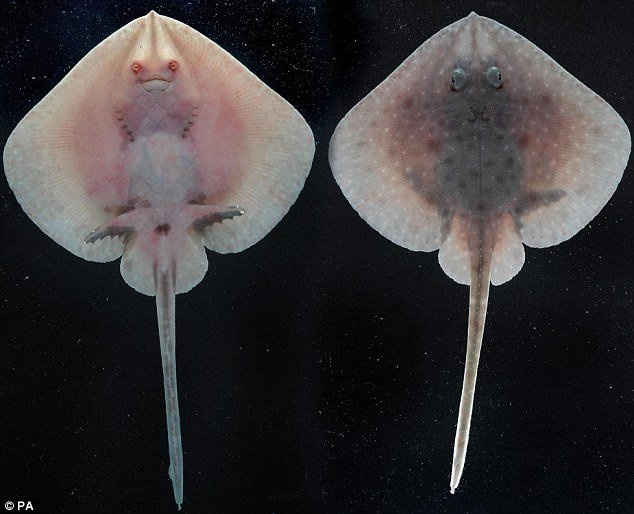 英国公布南极海域奇特生物照片 - rszx - 容山中学官方博客