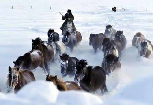 1月9日,在新疆阿勒泰地区的富蕴县,哈萨克族牧民赶着马群离开被大雪覆盖了的冬季草场。新华社记者沈桥摄