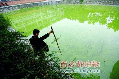 昨日,广州市白云区太和镇谢家庄,市民用竹竿试探溺死女童的池塘的深度图片