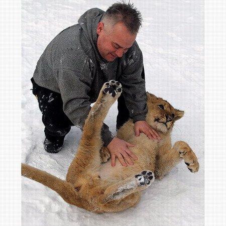 精彩动物照集锦令人发笑