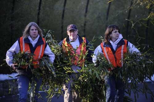 """2月4日,在美国首都华盛顿国家动物园,饲养员搬运大熊猫""""泰山""""在旅途"""
