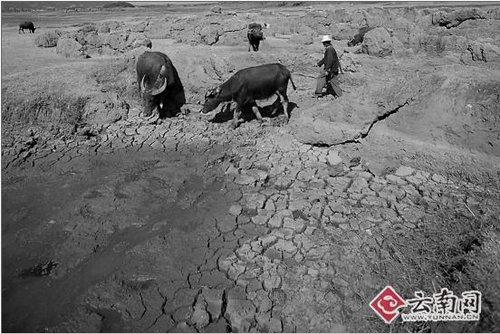 云南297万人将因旱缺粮 680万人需救助(组图)