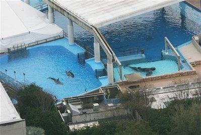 美海洋乐园发生惨剧 训练员遭虎鲸袭击致死