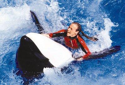 美国训练员被虎鲸咬死续:可能是马尾辫闯祸