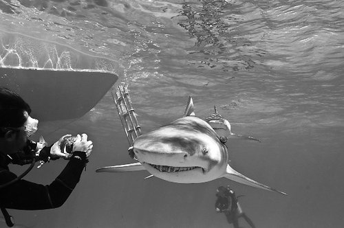 摄影师潜入海底拍摄鲨鱼