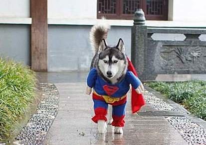 上海世博会前为全市宠物狗打防疫针