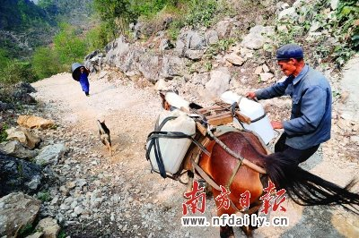 在那坡县龙合乡忠合村果林屯,村平易近们用马驮水。南方日报特派记者高笑摄